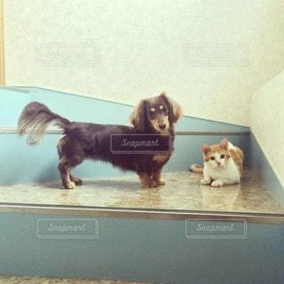 犬の写真・画像素材[42613]