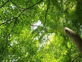 自然の写真・画像素材[42674]