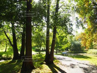 緑の小道の写真・画像素材[1096108]