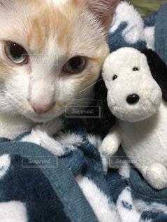 ネコの自撮り - No.1236479