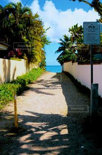 ラニカイビーチの写真・画像素材[1229466]
