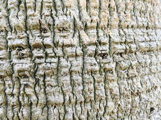 ヤシの木の写真・画像素材[1231293]