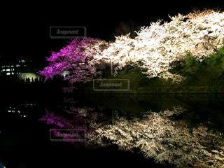 近くの花のアップの写真・画像素材[1231430]