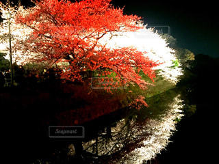 近くの木のアップの写真・画像素材[1231436]