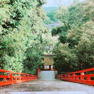 神社の階段の写真・画像素材[1259387]
