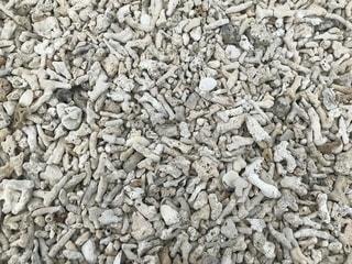 サンゴの写真 砂場の写真・画像素材[1333082]