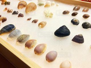 貝殻採取の写真・画像素材[1234463]