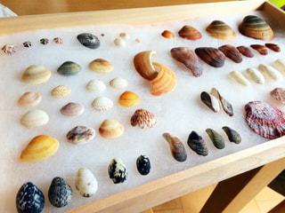 貝殻採取の写真・画像素材[1234466]