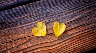 可愛いハートの花びらの写真・画像素材[1246582]