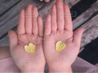 黄色のハート見つけたよ!の写真・画像素材[1246730]