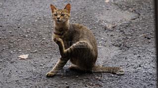 アスファルトの上の猫の写真・画像素材[1246917]
