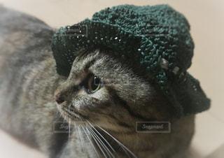 帽子をかぶってる猫のアップの写真・画像素材[1375337]