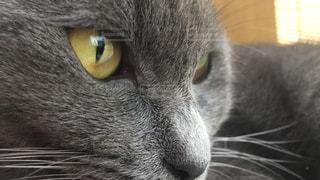 近くに黄色の目を持つ猫のアップの写真・画像素材[1456932]