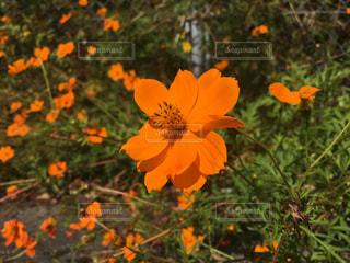 花の写真・画像素材[1573052]