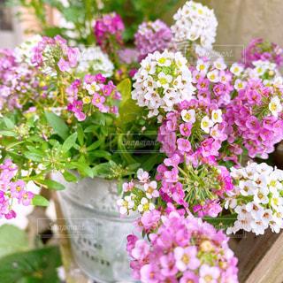 花のクローズアップの写真・画像素材[3072822]