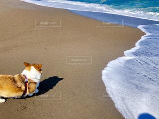 砂浜のわんこの写真・画像素材[2124646]
