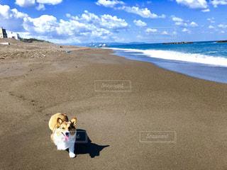 浜辺のわんこの写真・画像素材[2124649]