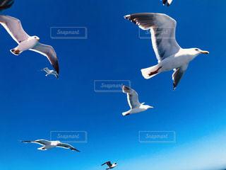 空中を飛んでいるカモメの群れの写真・画像素材[2184548]