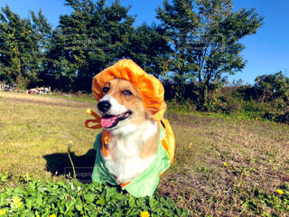 ハロウィンのカボチャ犬の写真・画像素材[4618387]