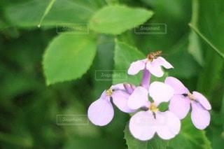 自然の写真・画像素材[52261]