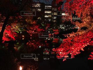 八芳園 紅葉ライトアップの写真・画像素材[1677245]