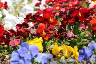 近くの花のアップの写真・画像素材[1232568]