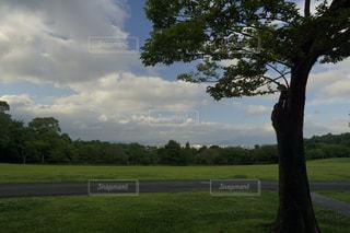 芝生広場の大きな木の写真・画像素材[1240003]