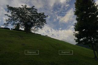草で覆われた丘の上の木の写真・画像素材[1240004]