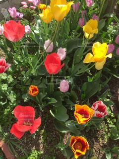 春の訪れの写真・画像素材[1235020]