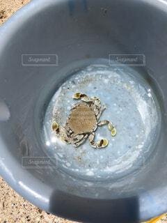 砂浜にいた蟹さんの写真・画像素材[4053636]
