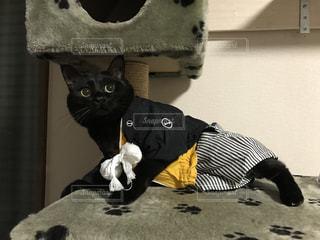 黒猫さんの写真・画像素材[1233358]