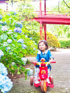 紫陽花と女の子の写真・画像素材[1239267]