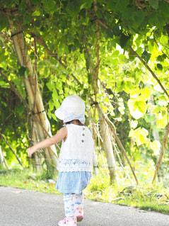 木陰をお散歩の写真・画像素材[1314609]