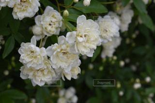 近くの花のアップの写真・画像素材[1243604]