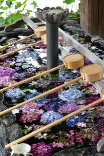 手水舎の紫陽花の写真・画像素材[2221002]