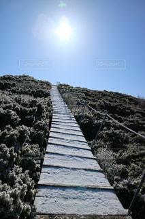 大山登山道の写真・画像素材[1234941]