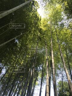 竹林の木漏れ日の写真・画像素材[1235055]