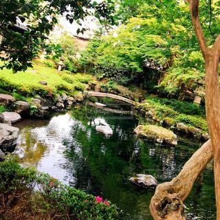 風流な庭の風景の写真・画像素材[1241411]