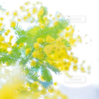 近くの花のアップの写真・画像素材[1236860]