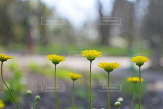 近くに黄色い花の写真・画像素材[1244138]