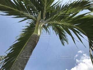 プーケットのヤシの木と青空の写真・画像素材[1235313]
