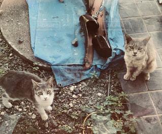 地面に座っている猫の写真・画像素材[1236350]