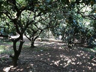 森の中の写真・画像素材[3910197]