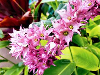 ハワイの庭に咲く花の写真・画像素材[1306896]