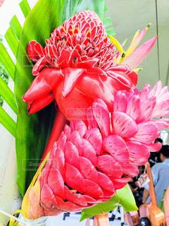 ハワイの花の写真・画像素材[1341240]