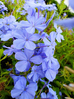 Beautiful Flowerの写真・画像素材[1529879]