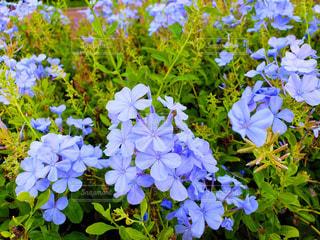 Beautiful Flowerの写真・画像素材[1529880]