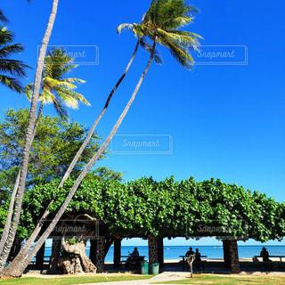 週末のビーチパークの写真・画像素材[1531940]