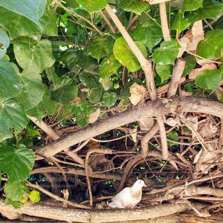 ビーチパークで鳥の巣を見つけました!の写真・画像素材[1531959]