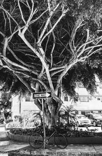 秋の街路樹の写真・画像素材[1610433]